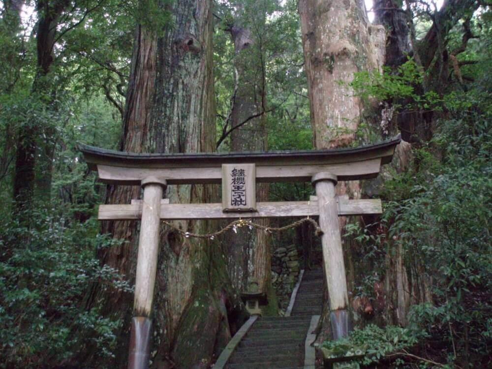 Tsugizakura-oji